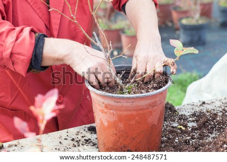 planting a small plant into a pot - stock photo
