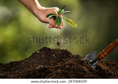 Planting a small plant on a pile of soil on green bokeh backgrou - stock photo