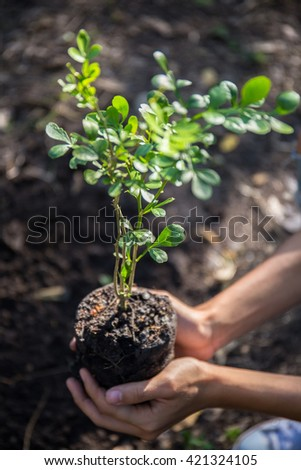 Planting a tree. - stock photo