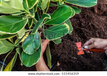 Planting a tree,Close- up planting the tree while working,People put compost soil a jardiniere with a red shovel.
