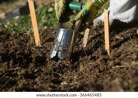Planting bulbs with flower bulb planter outdoors in garden. Use of garden tools. - stock photo
