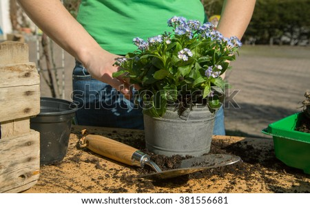 Planting colorful spring flowers and bulbs in the garden  - stock photo