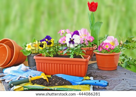 Planting flowers, flower pots, potting soil, trowel, work gloves and plants on a table outdoors.