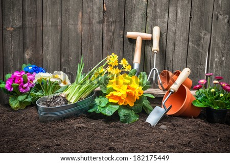 Planting flowers in pot with dirt or soil at back yard - stock photo