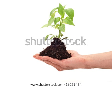 Planting fresh green to save environment