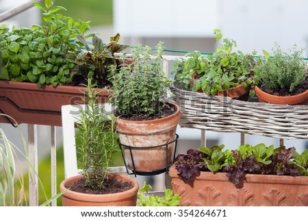Planting herbs and vegetables on balcony - stock photo