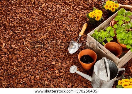 Planting pots, trowel, steel watering can and wooden box full of seedlings over red pine bark mulch with copy space outdoors - stock photo