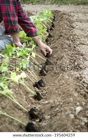 Planting seedlings - stock photo