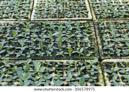Planting seedlings in the field - stock photo