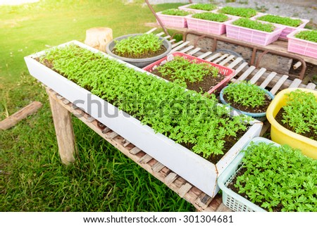 "Planting seedlings ""Marigold"" in pots. With household waste materials - stock photo"