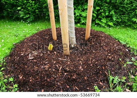 planting tree - stock photo