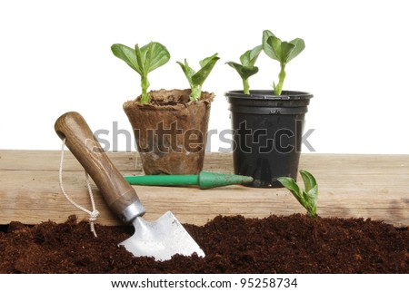 Planting vegetable seedlings from pots into the ground