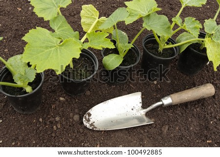 Planting vegetable seeds in prepared soil in spring