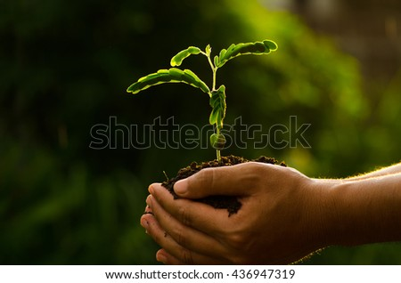 Planting with sunlight, Save forest concept, Male hand holding young tree with sunlight.