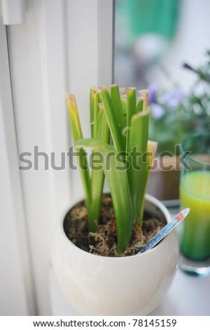plants - stock photo