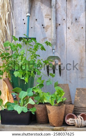 plants and gardening accessories with tools on wooden background - stock photo