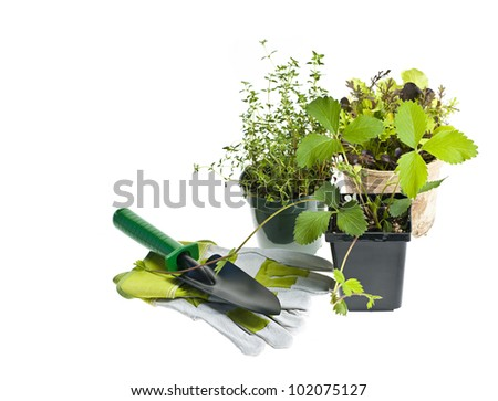 Plants and seedlings in pots with gardening tools isolated on white