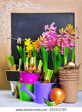 Plants and tools - stock photo