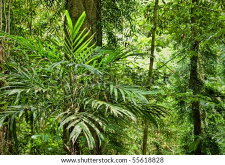 plants and trees in the beautiful world heritage rain forest