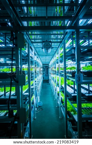 Plants are cultivated in hydroponic system - stock photo