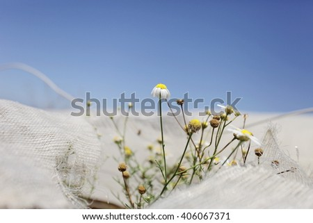 Plants,daisies struggle with unpleasant environment industry. - stock photo
