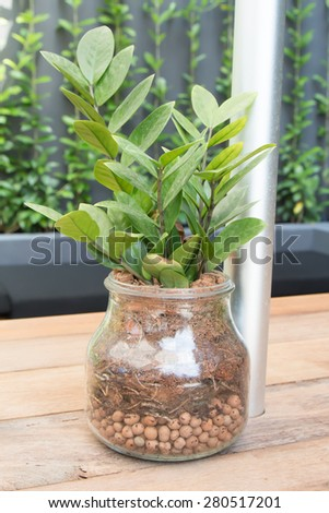 Plants decorate in glass bottle - stock photo