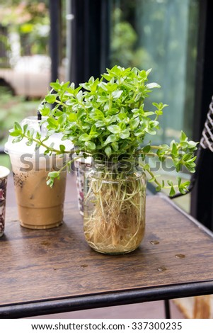 Plants decoration in glass bottle in the coffee shop. - stock photo