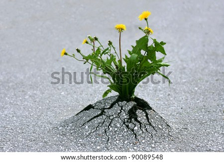 Plants emerging through hard asphalt. Illustrates the force of nature and fantastic achievements. - stock photo