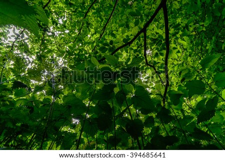 plants for natural background, nature series