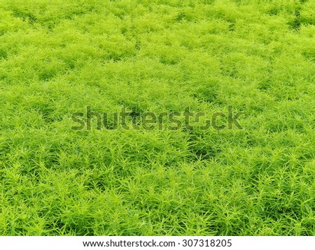 Plants, Fresh Green Grass, Natural Summer Background - stock photo