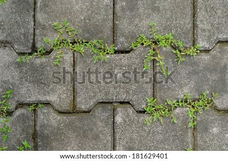 plants  growing between concrete pavement - stock photo
