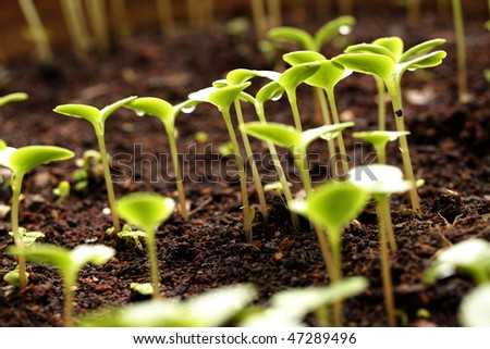 Plants growing from soil - stock photo