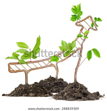 Plants growing from soil heaps forming arrow pointing upwards - stock photo