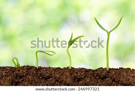 Plants growing from soil - Plant progress - stock photo