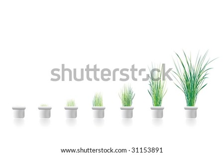 plants growing in stages. concept image for business growth. Excellent in  presentations as a graph. - stock photo