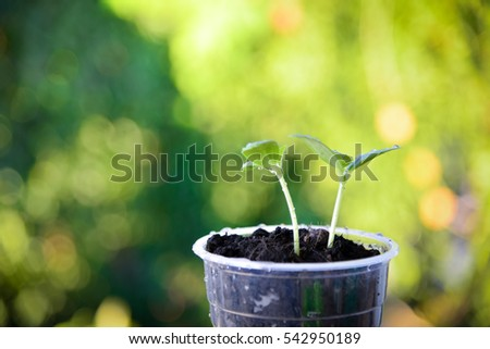 Plants growing on green nature background.