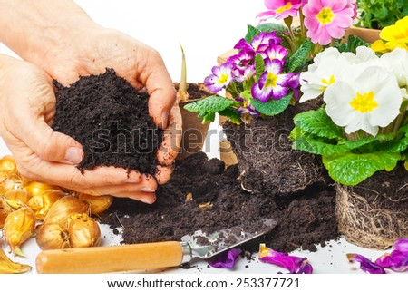 Plants, hands with potting soil