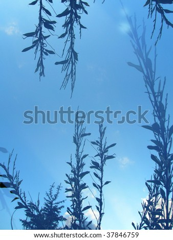 plants in a frame on a blue background