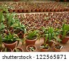 Plants in a greenhouse for sale - stock photo