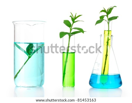 plants in a test tube isolated on white - stock photo