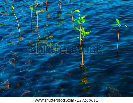 Plants in blue water - stock photo