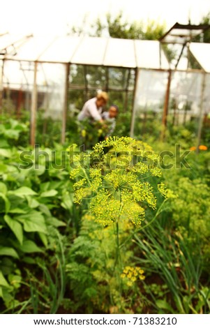 Plants in garden with glasshouse with two persons in background - stock photo