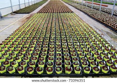 Plants In Greenhouse - stock photo