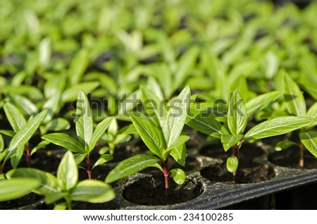 Plants in nursery tray. - stock photo