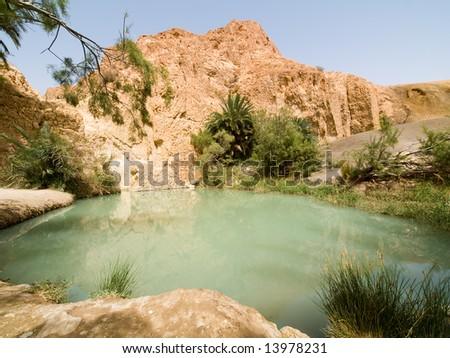 Plants in Oasis on the desert - stock photo