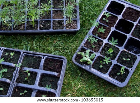 Plants in Plastic Trays - stock photo