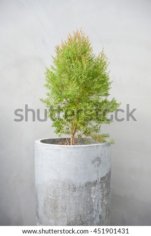 Plants in pots made of concrete. On raw concrete background. - stock photo
