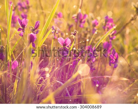 Plants in sunrise abstract - stock photo
