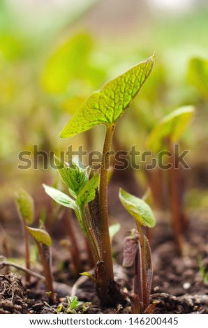 Plants in the garden - stock photo