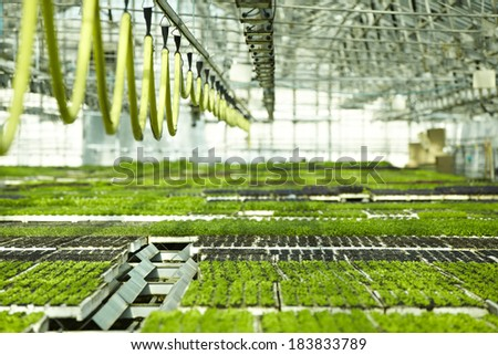 Plants in the greenhouse full of light - stock photo